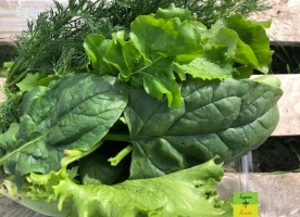 Mix verde eco: spanac, patrunjel, mangold eco