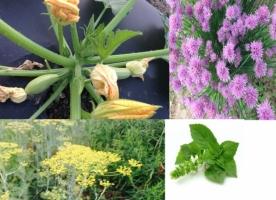 Flori eco comestibile