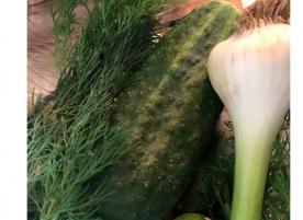 Salata de castraveti, usturoi si flori de marar eco