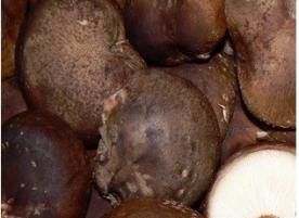Ciuperci bio Shiitake n_i