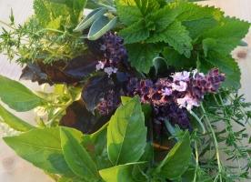 Mix frunze cimbru, busuioc, tarhon, izma, salvie