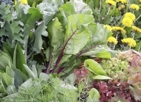 Salata eco family