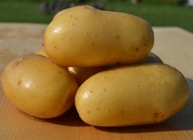 Cartofi albi eco
