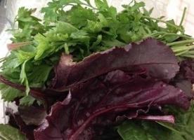 Mix de vara - frunze de sfecla, mizuna,  kale, patrunjel